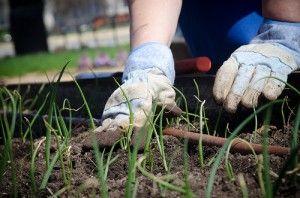 5908589011 09ce166da7 Grow a Garden With SNAP (Supplemental Nutrition Assistance Program)