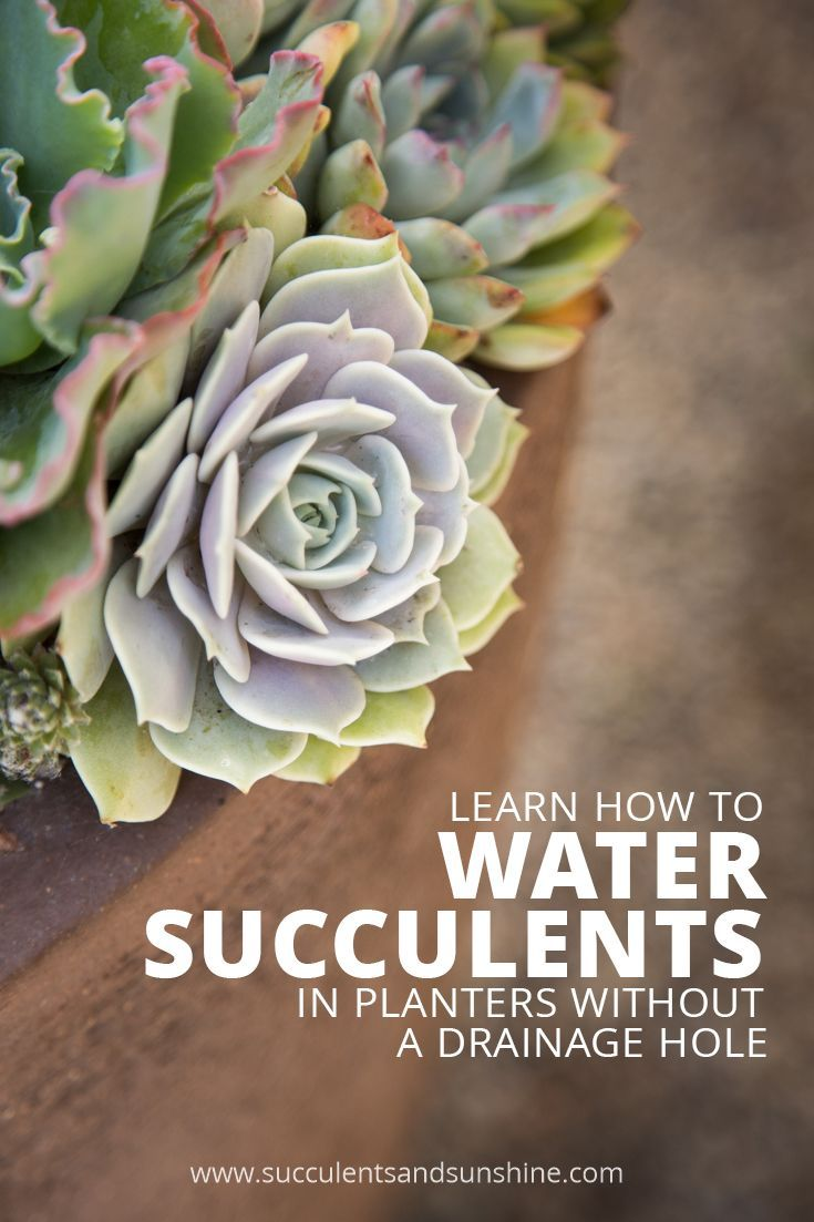 This post on watering succulents is just what I needed! Now my succulents are thriving!