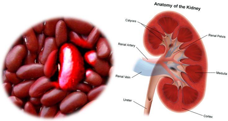 Human Kidney Failure Raw Food Diet