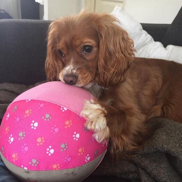 lief! lifestyle dierenaccessoires voor kat & hond - hondenspeeltje roze bal | pets accessories for cats & dogs