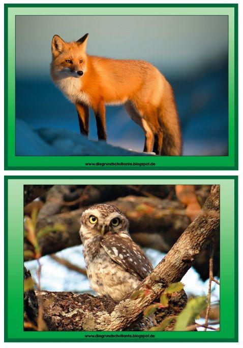 Ebenfalls zum Thema Wald habe ich diese Bild- und Wortkarten zu 15 verschiedenen Tieren erstellt. Sie werden zuerst im Unterricht genutzt un...