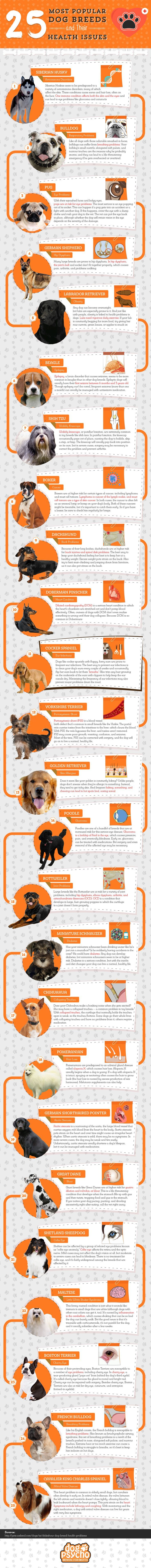 Most Popular Dog Breeds and Their Natural Health Problems #Infographic #Animals #Dogs #Health