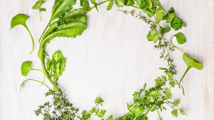 Keukentip: eetbaar onkruid - Doe-tips - Veldverkenners
