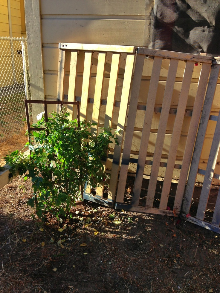 repurposed an old broken futon base as a trellis for our new climbing rose vine  9 best futon slats images on pinterest   futon frame reclaimed      rh   pinterest