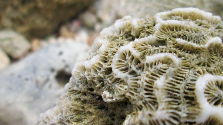 Coral, fragmento de la naturaleza, contemplando formas [San Andres - Isla, Colombia] Capturado por William Dueñas (2016). 📷-Coral, fragment of the nature, contemplating forms [San Andres - Island, Colombia] Captured by William Dueñas (2016).