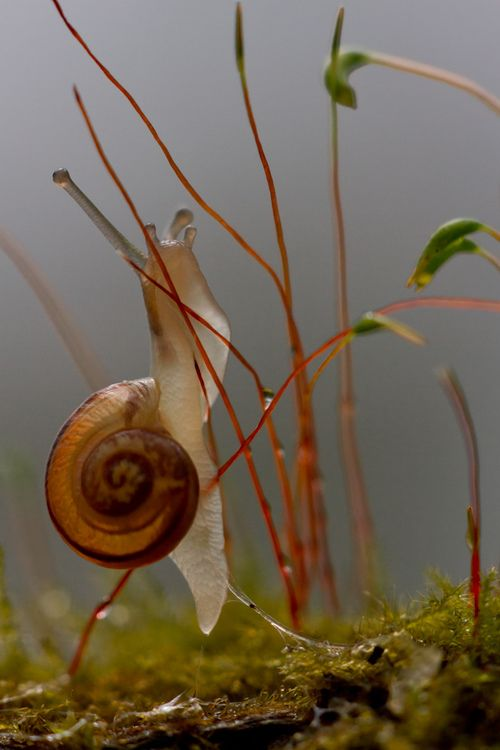 Snail by Pascal Jahan