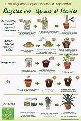 Recyclez même vos légumes ! Découvrez ceux que l'on peut replanter