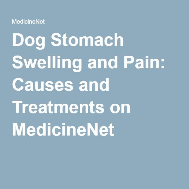 Dog Stomach Swelling and Pain: Causes and Treatments on MedicineNet