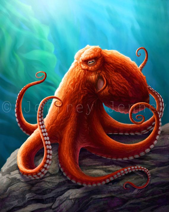 giant pacific octopus 8x10 fine art print by