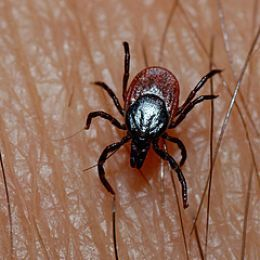 how to avoid ticks in the woods