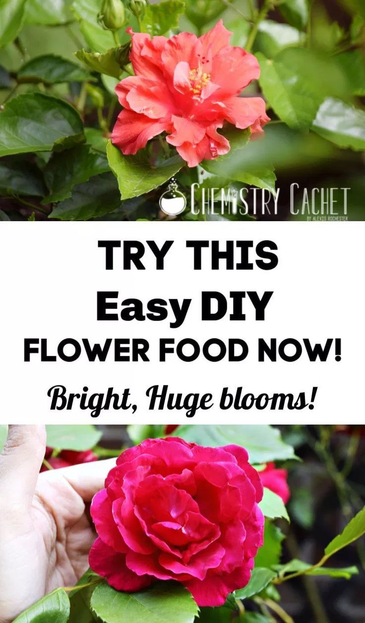 Chemist Solutions Easy Homemade Plant Food Recipe Homemade Flower Food Plant Food Diy Homemade Plant Food