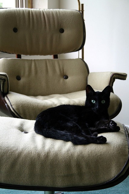 Cat in the Eames chair, via Flickr.