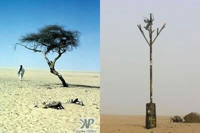 Tree of tenere in niger, the only exhisted tree in 400 mile area for 250 years, destroyed by a drunk libyan driver know a metal representation is standing in order of it.