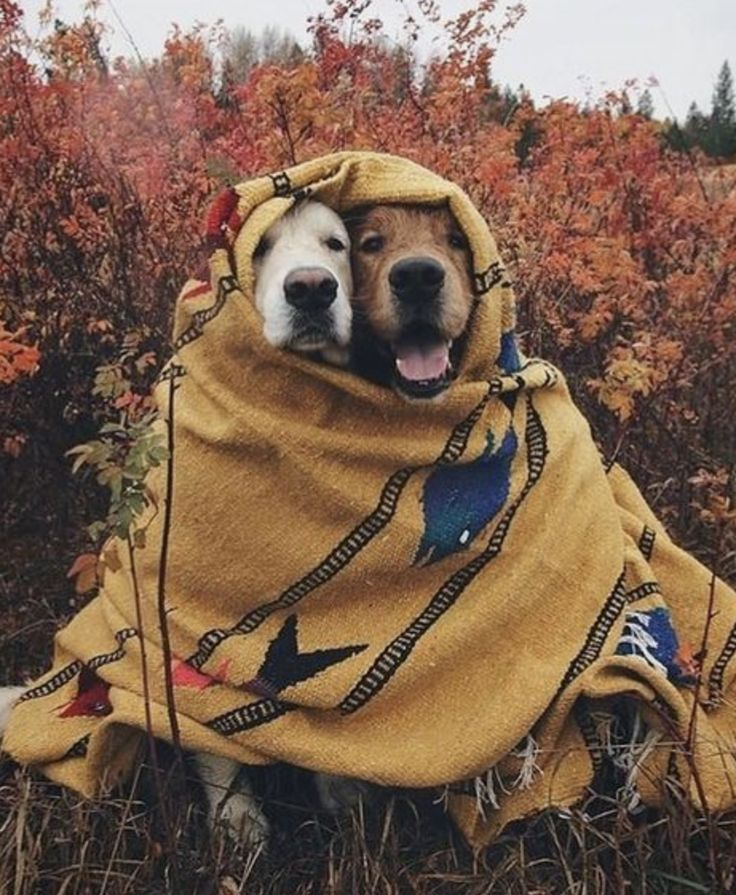 This is probably the best picture of fall we have ever seen. We are not worthy of dogs.   www.bullymake.com