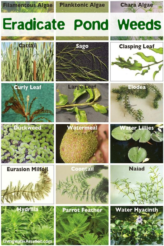 Control and eradicate pesky invasive pond weeds / http://www.livingwateraeration.com/chemicals-weed-control.html