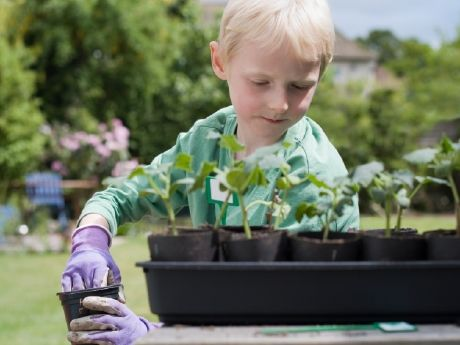 School and community gardens can be used for academic enrichment, where students can learn about nutrition, food security, and ecological sustainability.