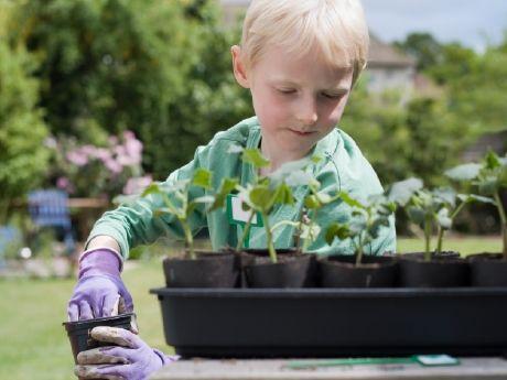 Garden-Based Learning | Edutopia