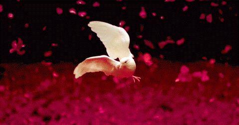 http://decentscraps.blogspot.com/ Para cuando las cosas no se ven bien y tienes problemas: Un pájaro que vivía resignado en un ár...