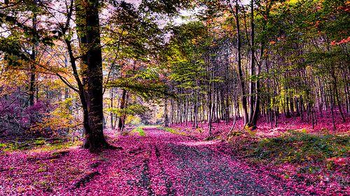 304 / 365 - Pink Path