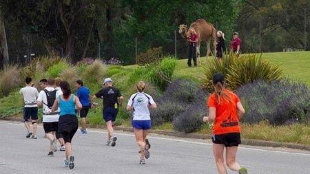 Ben je die vreselijk saaie sportschool ook zo zat? Op zoek naar een beetje avontuur tijdens je wekelijkse hardlooptraining? Ga dan eens Safari-joggen. Safari-joggen, horen we je zeggen, dat kan toch niet in Nederland? Maar jawel, safari-joggen is namelijk de nieuwe en ultieme hardloopervaring op… de Veluwe.