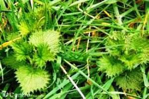 Les mauvaises herbesou herbes follessont des plantes compagnes de l'homme depuis la nuit des temps. En effet, elles se plaisent dans les milieux anthropiques (sols nus, retournés, tassés, riches…