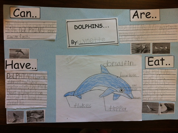 Kindergarten research project on dolphins...