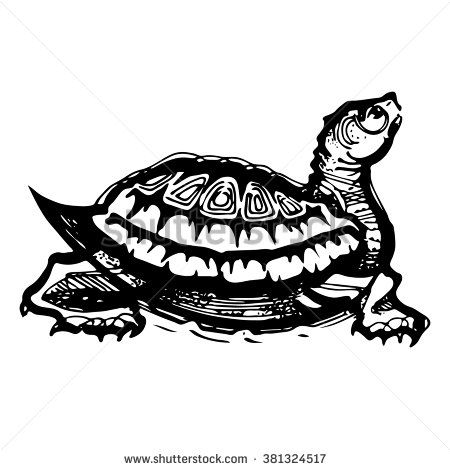 Turtle on white background. Vector illustration.  - stock vector
