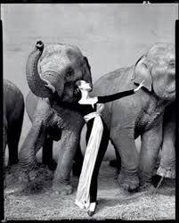 biografia de christian dior - Buscar con Google: Elephants, Fashion, Richard Avedon, Art, Richardavedon, Struction, Photography, Winter Circus