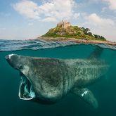 Riesen Haie