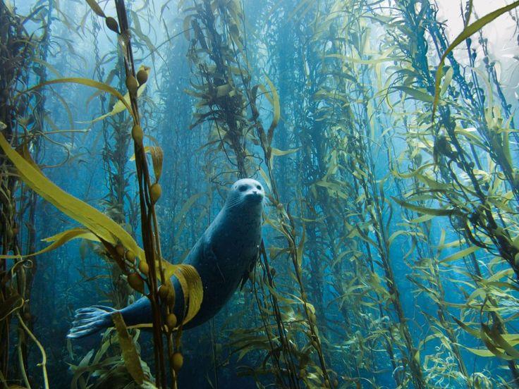 A curious seal, USA