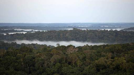 La ruée vers l'or accélère la déforestation - 7SUR7.be