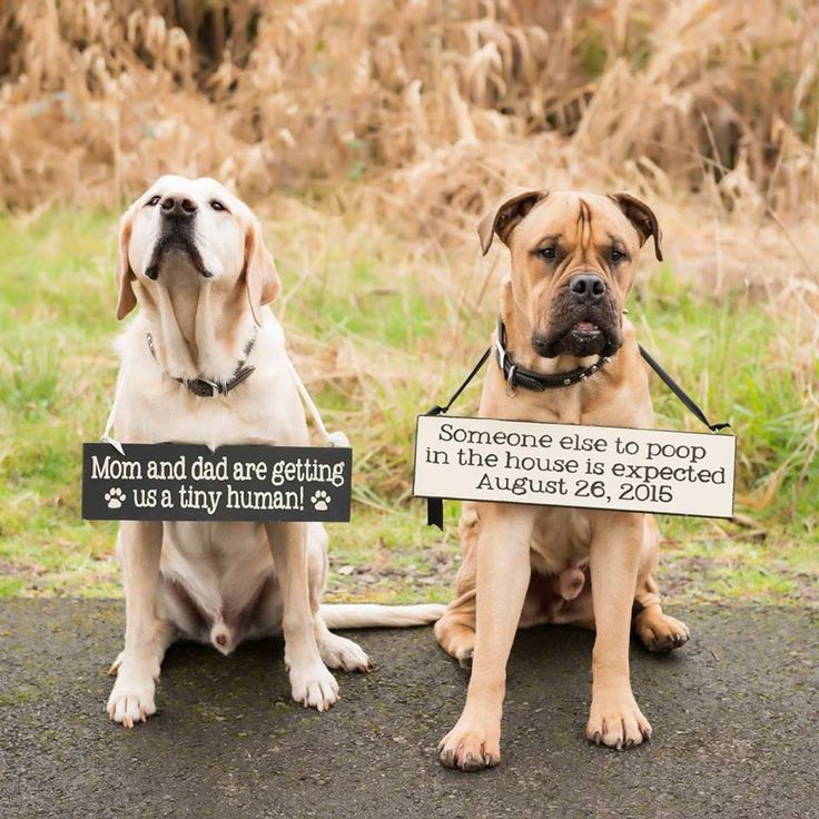Let the puppies help with the big news!  Custom pregnancy announcement signs on Etsy!