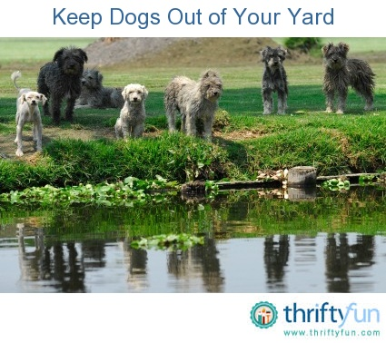 Keep Your Cat In The Yard
