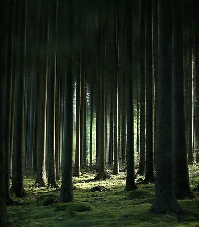 Silence Nature Life On Earth Forest Trees Green Wild Wilderness Aesthetic Photography Nature Landscape Photography Trees Landscape Photography