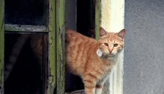 21 Best Cat Doors Images On Pinterest Funny Stuff Funny
