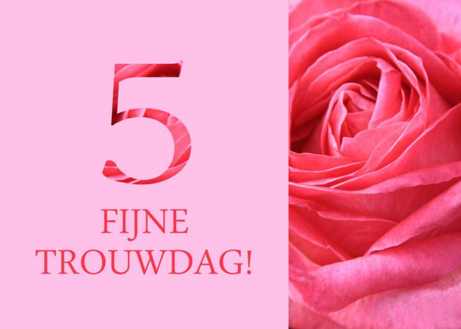 5th Anniversary Dutch Fijne Trouwdag Pink Rose Close Up