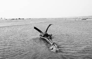 """Saatchi Art Artist Subhrajyoti Parida; Photography, """"An iron anchor holding to the sands..."""" #art"""