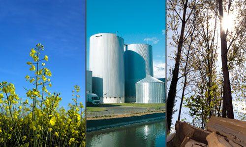 La biomasse est une énergie non polluante qui contribue au développement de l'écologie et qui réduit les émissions de gaz à effet de serre, grâce aux végétaux. Ce gaz est produit grâce à la fermentation des matières organiques.