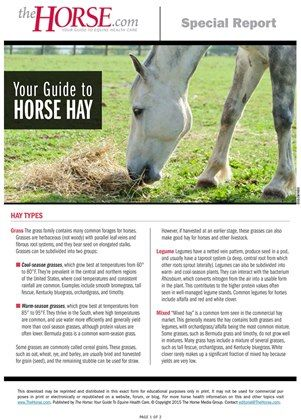 Do you know your grass hay from your legumes? Learn about different types of horse hay in our exclusive special report.