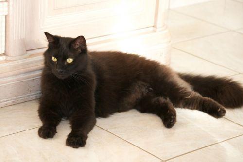 chat rencontre adulte Ille-et-Vilaine