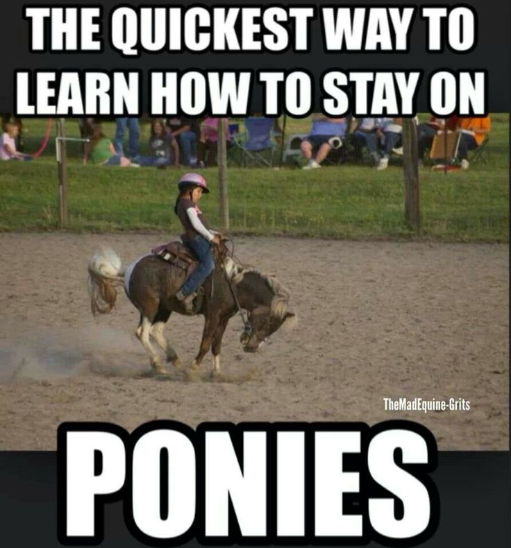 Funny Pony Quotes: 25+ Best Ideas About Horse Humor On Pinterest