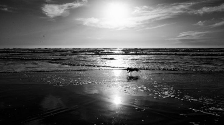 Seven Reasons Why We Adore Ocean Beach: Its biggest fans—dogs—who must view it as some sort of heaven on Earth