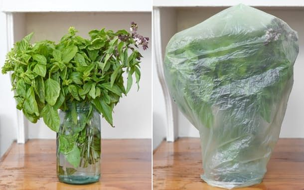 The best way to store basil may not be the prettiest way, but it can keep a bunch fresh and green for up to a week or two. Give this a try!