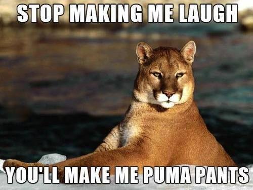 bad puns 14 Some good but mostly bad puns (16 photos)