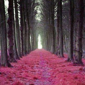 onflirt com forest