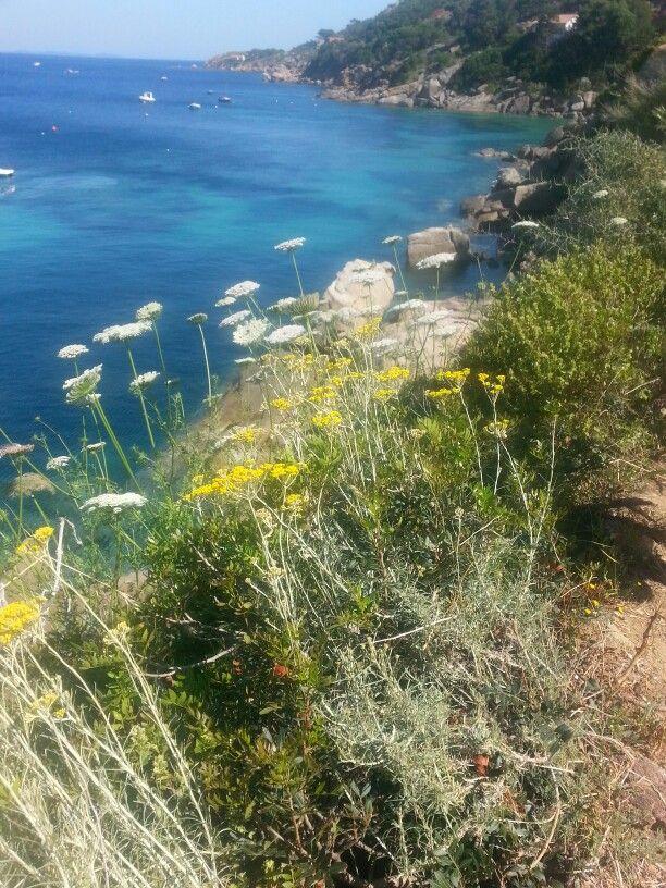 Sul sentiero che porta alla spiaggia di Caldana, Isola del Giglio. - walking to Caldana beach, Giglio Isle #maremma #tuscany #Italy