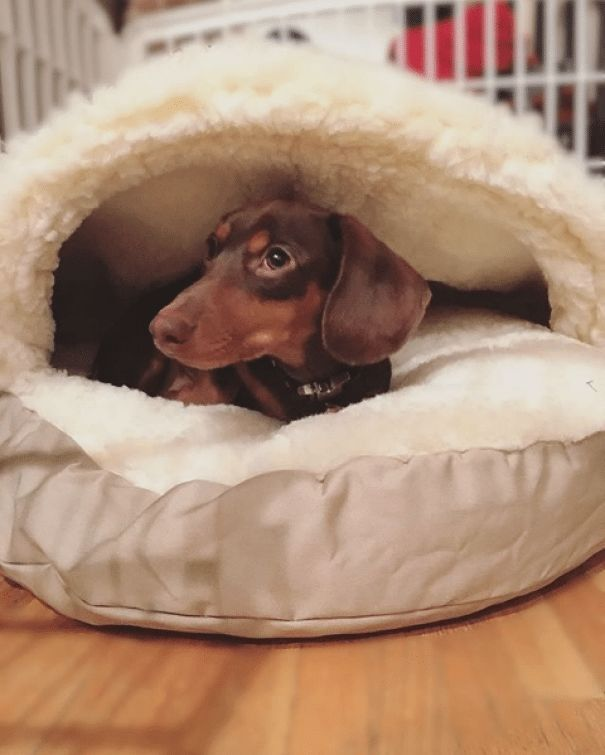 Dog Bed For Dogs Who Love To Burrow New Puppy Checklist Must