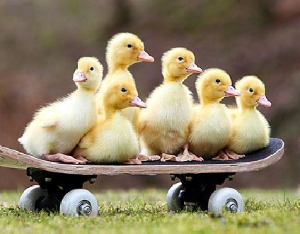 Duckling and Skateboards. Never thought I'd see them both in the same cute picture.