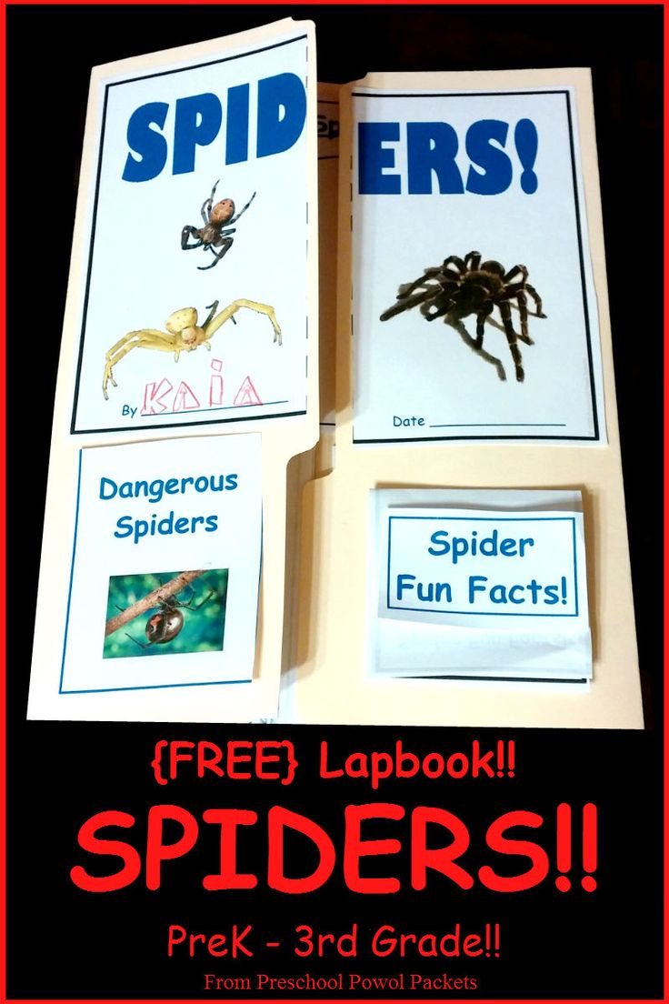 {FREE} Spider Lap Book!!  Learn all about spiders and make this fun lapbook to show off your work!  Everything you need is in this free download, including information pages!!  Just click on the picture to go to  Preschool Powol Packets and get it!