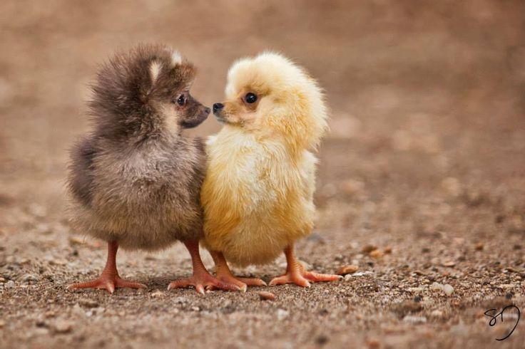 Top 16 des animaux hybrides de Sarah DeRemer, quand on a plus d'imagination que Dame Nature